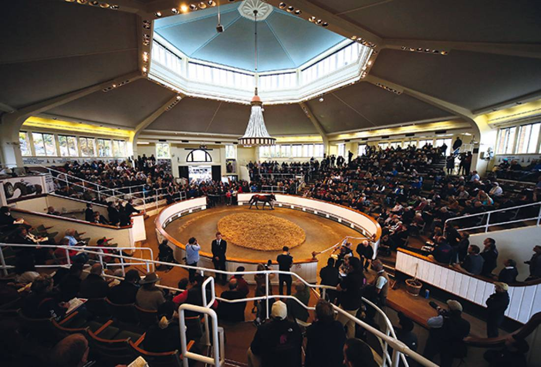 Tattersals Autumn Horses in Training Sale 2018